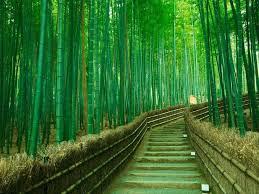 Arishiyama Bamboo Grove 1