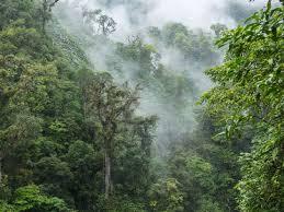 Monteverde Cloud Forest 1