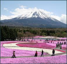 Mount Fuji National Park 1
