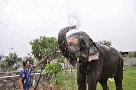 Elefantastic
