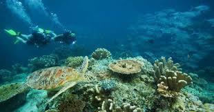 Scuba Gili Islands